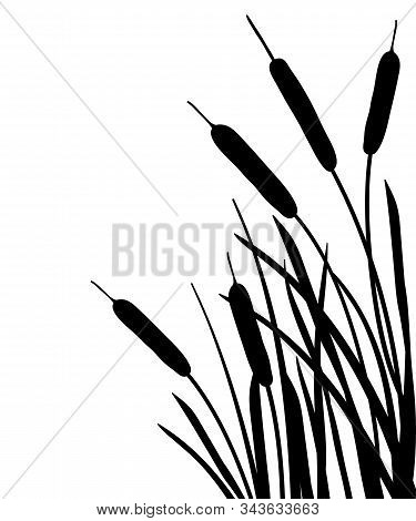 Vector Corner Bunch Of Bulrush Or Reed Or Cattail Or Typha Leaves Silhouette In Black Isolated On Wh