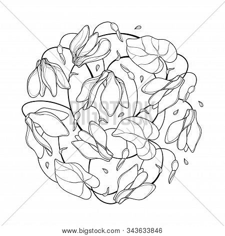 Vector Round Bouquet Of Outline Cyclamen Or Alpine Violet Bunch, Bud And Leaf In Black Isolated On W