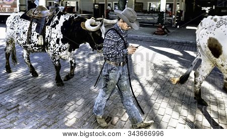 Fort Worth,texas, Jan.4,2020 - Longhorn Cattle Drive At The Fort Worth Stockyards. Cowboy Texting An