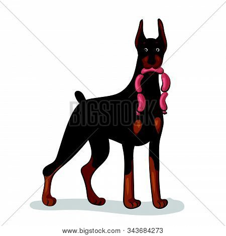 Doberman Dog With Sausages At The White Background