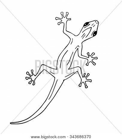 Vector Hand Drawn Doodle Sketch Gecko Lizard Isolated On White Background