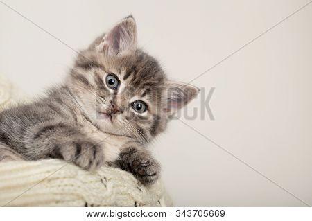 Cute Striped Kitten. Gray Striped Kitten Playing On Beige Cotton Plaid. Little Cute Striped Fluffy C