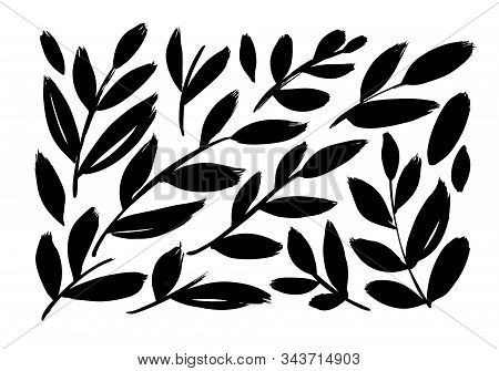 Brush Branches With Long Leaves Vector Collection. Set Of Black Silhouettes Leaves And Branches. Han