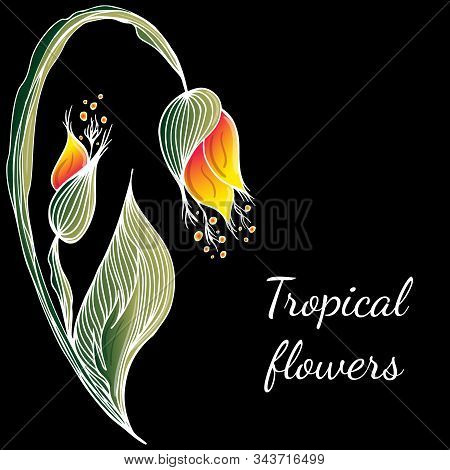 Flat Hand Drawn Tropical Flowers Isolated On Black Background. Vector Illustration. Exotic Tropical