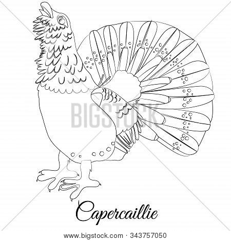 Capercaillie Bird Type Coloring. Vector Outline Illustration