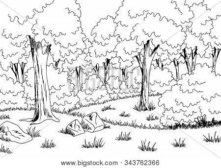 Forest Glade Graphic Black White Landscape Sketch Illustration Vector