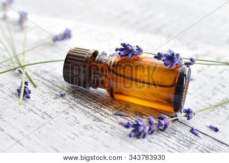 Organic Lavender Essential Oil In Dark Glass Transparent Bottle And Fresh Lavender Flowers On Wooden