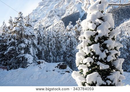 Detail Of Pines And Rocky Mountains In A Valley Covered In Snow During A Winter Morning With A Clear