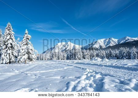 Pines And Rocky Mountains In A Valley Covered In Snow During A Winter Morning With A Clear Blue Sky
