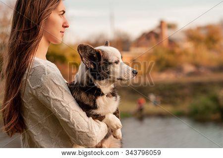 Smiling Woman Hugging Her Pet Welsh Corgi Dog. Welsh Corgi Dog Playing With A Woman Walking Outdoors
