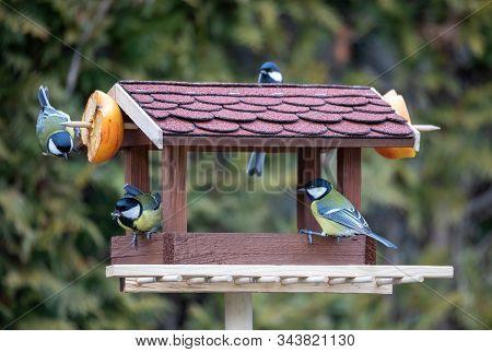 Beautiful Small Garden Bird Great Tit - Parus Major And Eurasian Blue Tit - Cyanistes Caeruleus, Fee