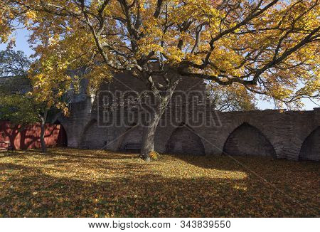 Colorful Trees And Park This Side The City Wall. The Old Defense Wall Of Medieval In Autumn Colors,