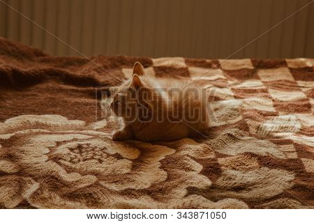 Cute Cat Sleeps At Home In Bed In The Sun. Rest, Relaxation, Rumbling. View From Above. Little Kitty