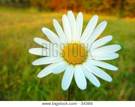 White Daisy On Colourful Background