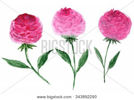 Cute Collection Of Simple Pink Watercolor Peony Flowers. Abstract Childish Magenta Flower For Patter
