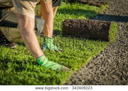 Professional Landscaper Lay Natural Grass Turfs. Natural Grass Installation. Gardening Industry Them