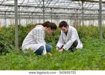 Apprentice in greenhouse checking plants