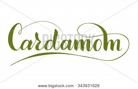 Vector Hand Written Cardamom Text Isolated On White Background. Kitchen Healthy Herbs And Spices For