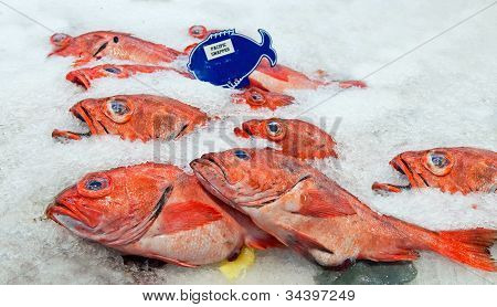 Pacific Red Snapper On Ice