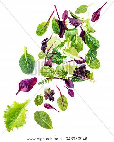 Flying Salad Leaves Isolated On White Background.   Assortment  With Arugula, Lettuce, Chard, Spinac