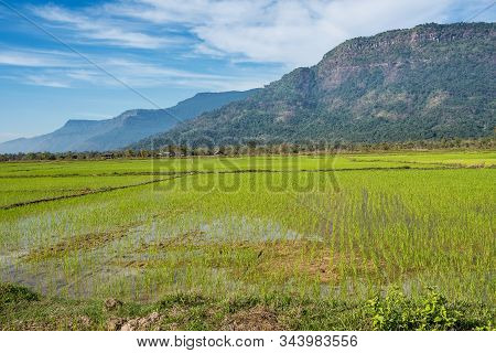 Rice Fields In The Champasak Valley, Laos In Southeast Asia