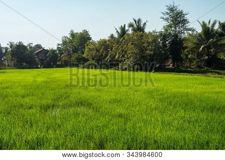 Beautiful Countryside View In Tropical Rural District, Siem Reap, Cambodia. A Trip To The Farms In T