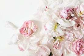 Close Up Of Fading Pink Roses And Peonies Flowers Petals Isolated On White Table Background. Floral
