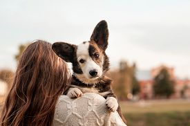 Portrait Of Young Woman Hugging Her Welsh Corgi Dog In The Autumn Park. Yellow Leaves Background. Yo