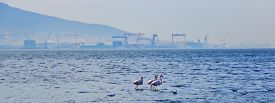Factories Threat Flamingos And Birds' Live.