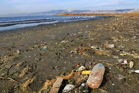Environmental Pollution On Beach Where Birds Live