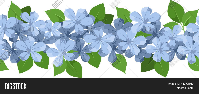 Flores Vectoriales Con Fondo Transparente: Vector Y Foto Fondo Transparente Horizontal Con