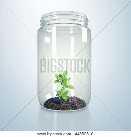 Green sprout inside glass jar
