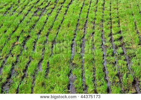 Grassland which slurry is injected.