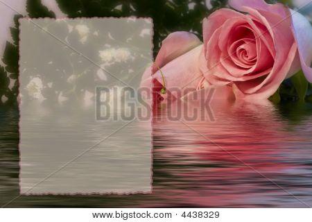 Delicate Rose Print