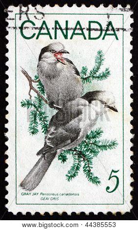 Postage Stamp Canada 1968 Gray Yay, Bird