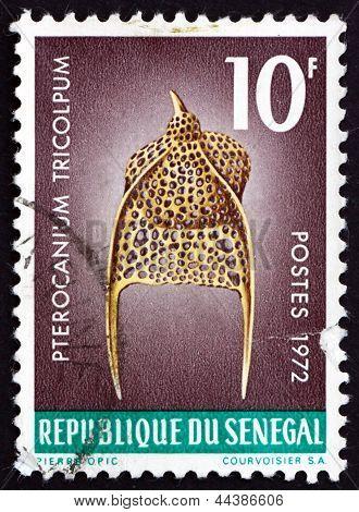 Postage Stamp Senegal 1972 Pterocanium Tricolpum, Zooplankton