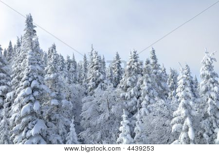 Winter Tree's