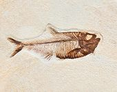 Fossil in stone of a prehistoric fish poster
