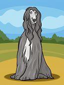 Cartoon Illustration of Cute Afghan Hound Purebred Dog and Rural Landscape poster