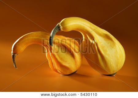 Couple Of Pumpkin