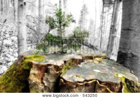 Young Tree Growing On Old Stump