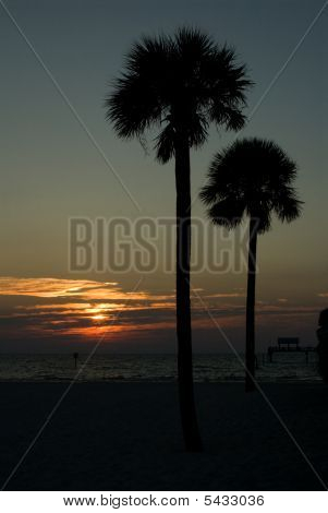 Sun Setting Beyond The Water With Two Palm Trees In The Foreground