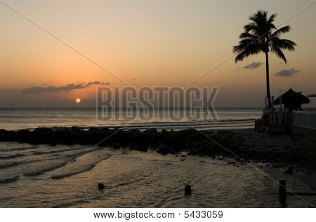 Sun Setting Beyond The Water With Lone Palm Tree
