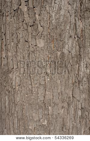 A texture of brown tree bark