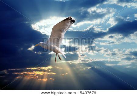 Majestic Bird Against Sunset Sky