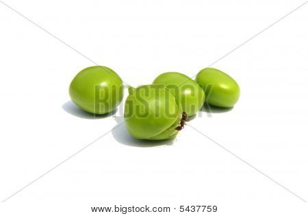 ant and peas isolated on white background poster