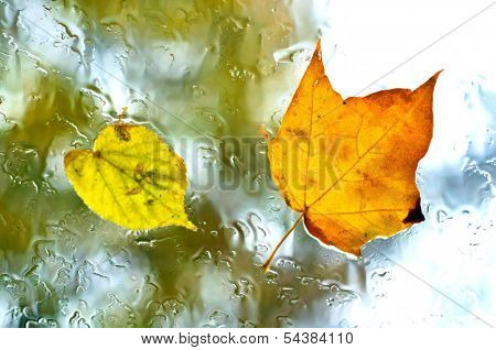Autumn leaves on a wet window