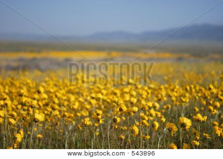 Beautiful Wild Flowers: Yellow
