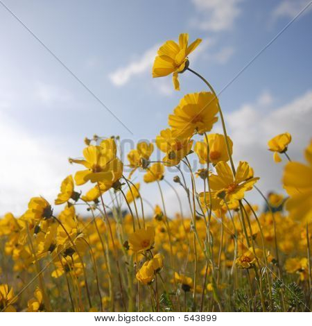 Beautiful Wild Flowers: Yellow Square