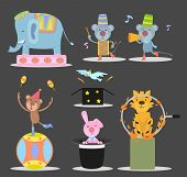 These animals in the circus animal shows. poster